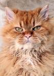 schöne katzenportrait
